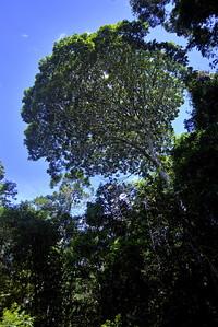 Parque Nacional do Descobrimento