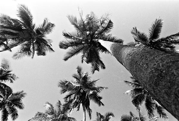 Praia do Coqueiral