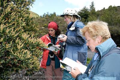 PAT004 Patagonia Botanical Tour