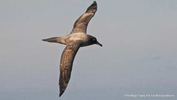 Birding Patagonia, the Drake Passage & Antarctic Peninsula
