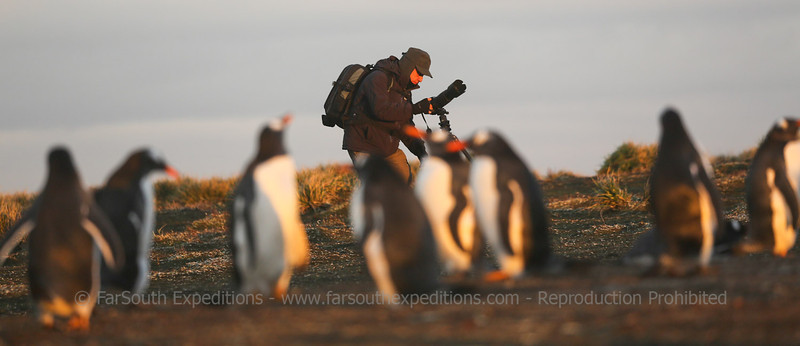 One of our guest while busy photographing at Pebble Island, Falkland Islands / Islas Malvinas