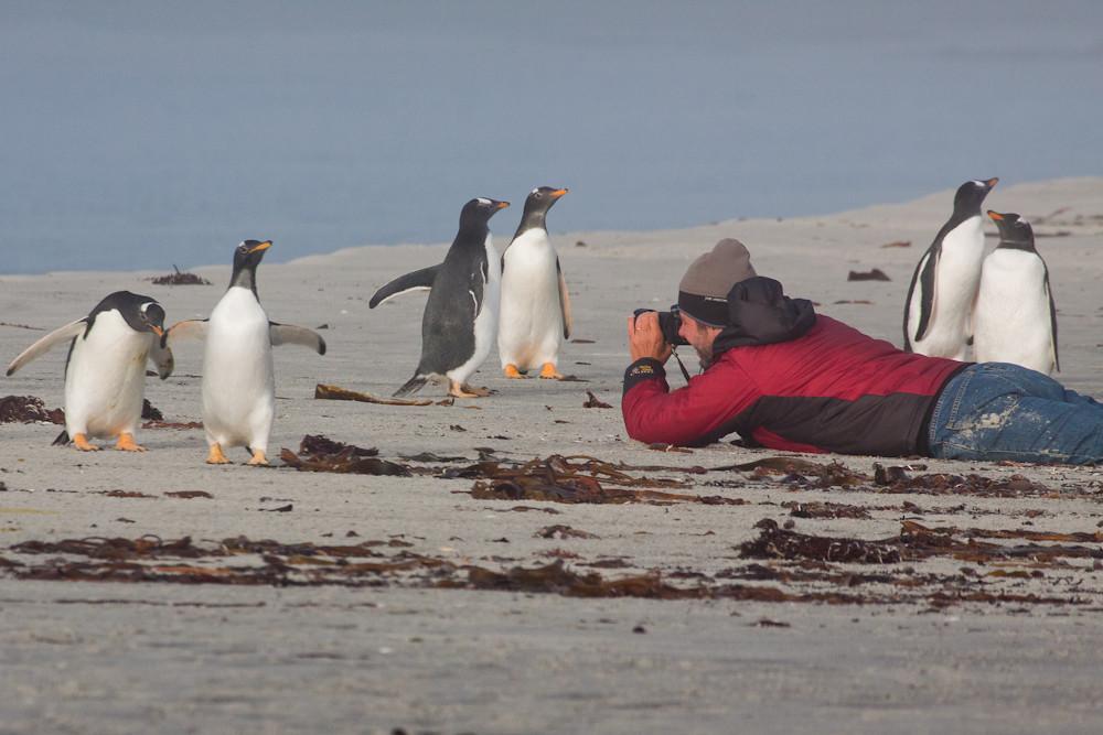 Our guest Rodrigo Jordan photographying Gentoo Penguins at Sea Lion Island, Falkland Islands / Islas Malvinas