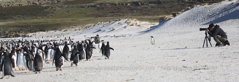 Photographing penguins at Pebble Island, Falkland Islands / Islas Malvinas