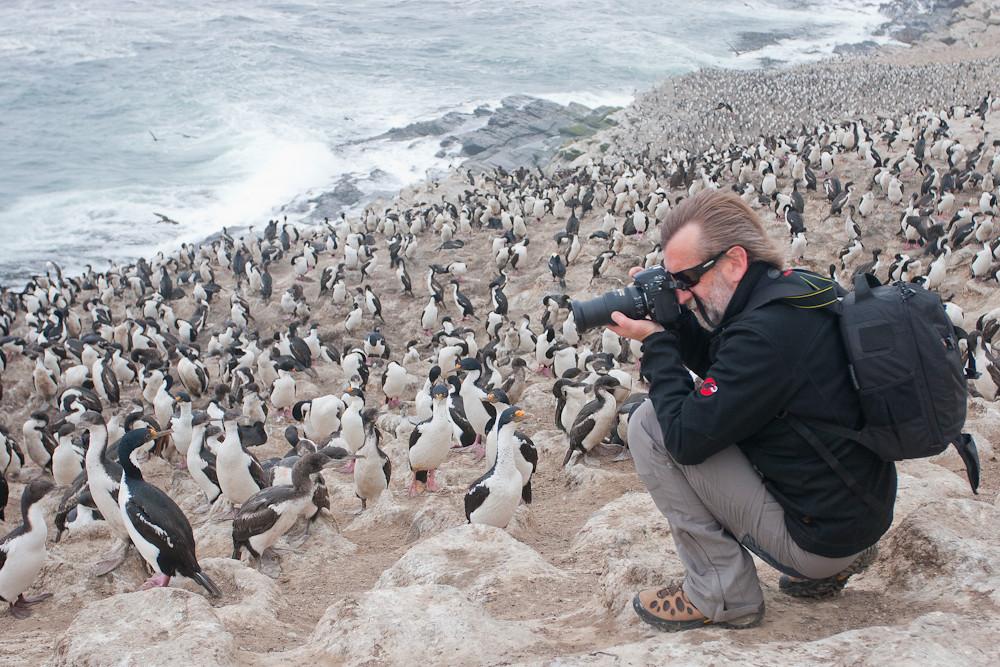 Our guest Carlos Tampier photographying King Cormorants (Phalacrocorax albiventer), Sea Lion Island, Falkland Islands / Islas Malvinas