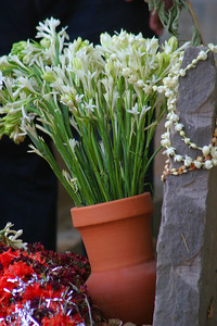 Saadia put flowers in a pot