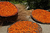 Pakistan, Ganish: Apricots drying on a village rooftop
