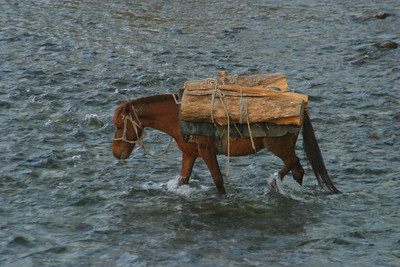 horse crossing the river, which is pretty low at this time of the year.