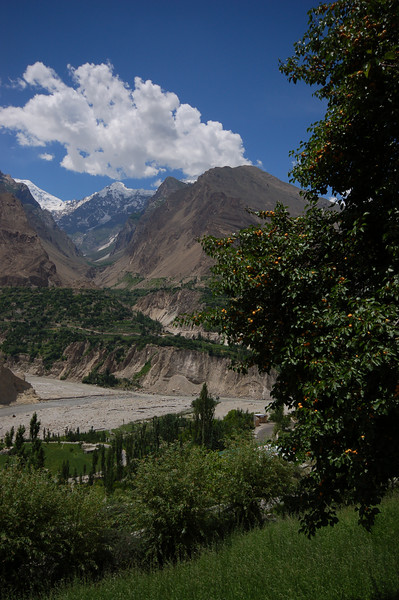 It's apricot season in the Hunza Valley