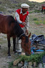 Man feeds his horse at Shandur Pass