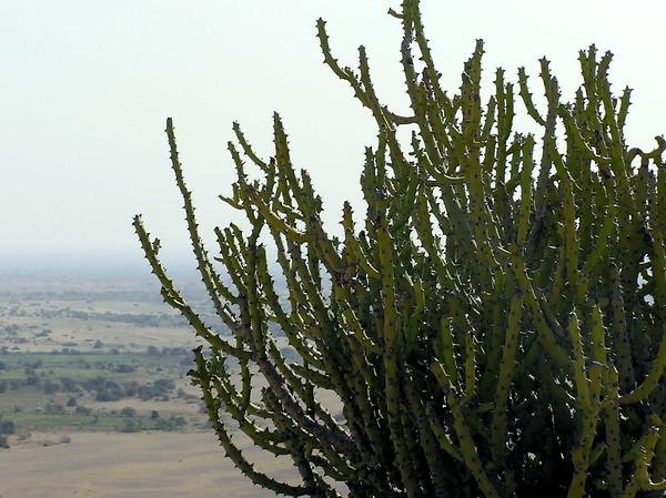 Sindh Flora
