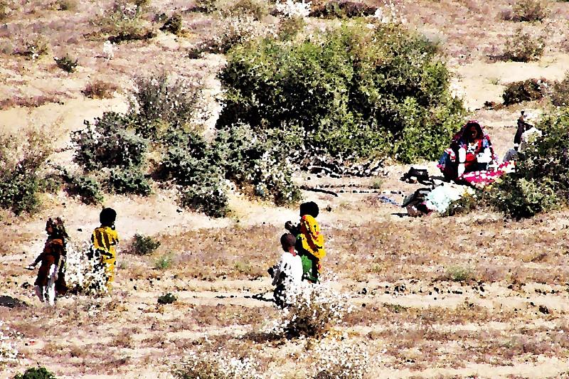 Thari Nomad Painting