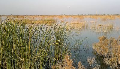 Landscape of Sindh on Pithoro - Shadipalli road.