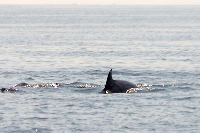 We spotted several schools of dolphins.