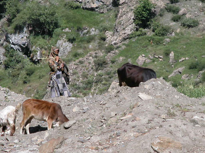 Goat herder on the trails near Kaghan Valley, Pakistan.