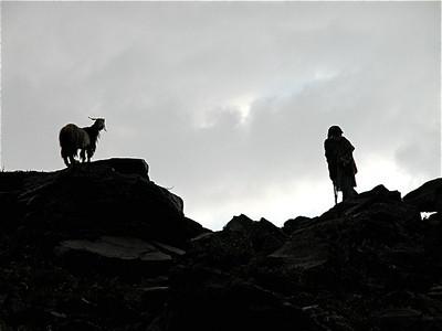 Goat herders near Naran, Pakistan.