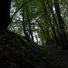 Hollow way near Spirkelbach II