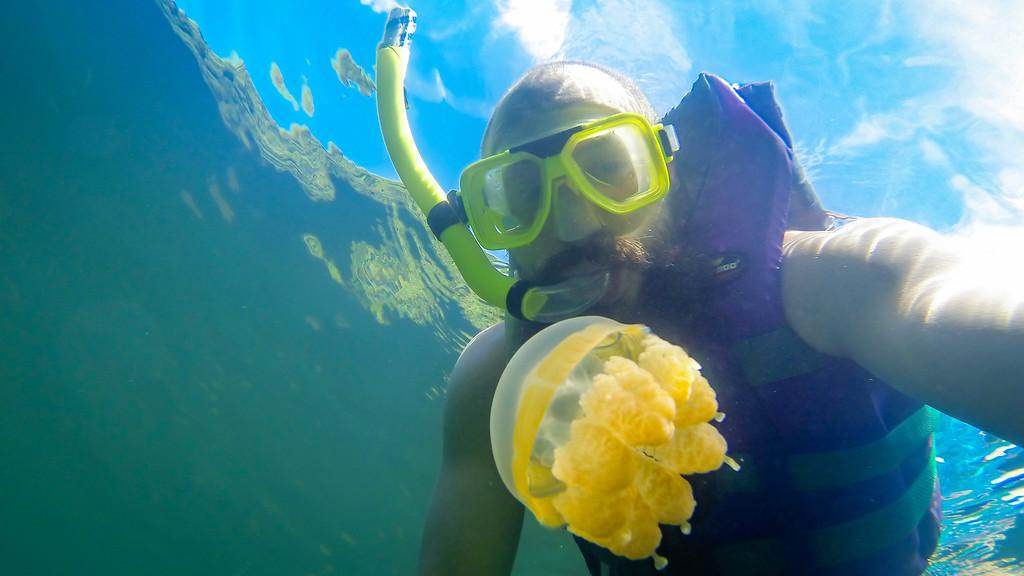 Snorkelling Jellyfish Palau
