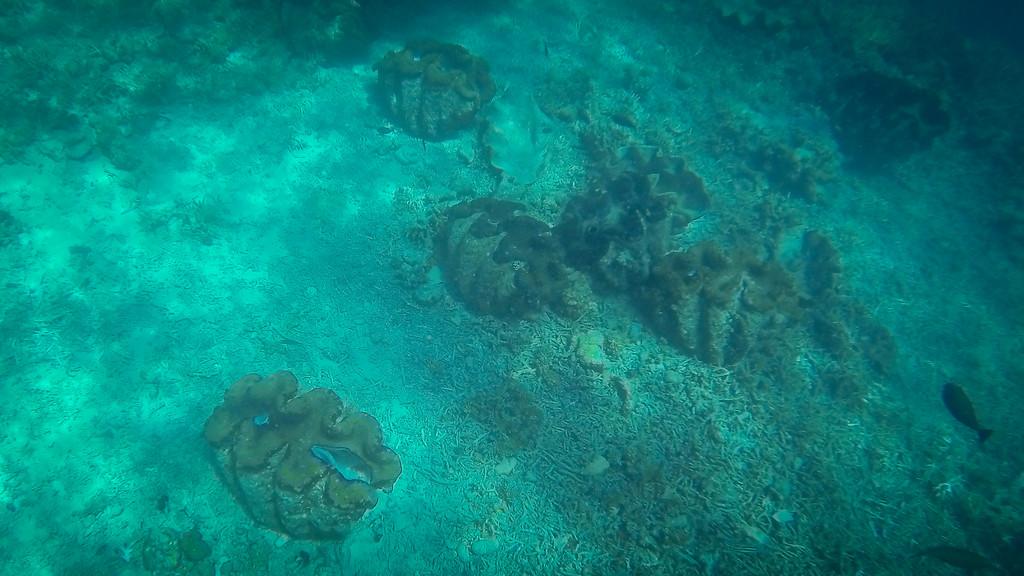Giant Clams Palau