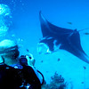 A manta ray approaches its cleaning station at the mouth of the German Channel, Palau.   2011-01-22.