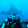 A diver from Rome, Italy, (Sandro) unexpectedly turns toward me as a manta glides by.  Made for a nice photo for him.   2011-01-15.