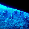 Exiting the Virgin Blue Hole, Palau.  We remain in the upper part of the cavern (at 90' to 100') because the cavern is quite deep.