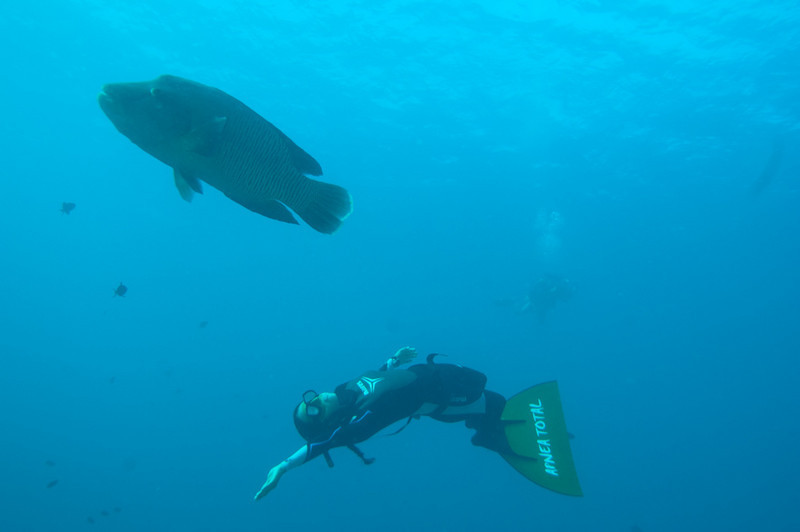Ai Futaki freedives with a napoleon wrasse at Blue Corner, Palau