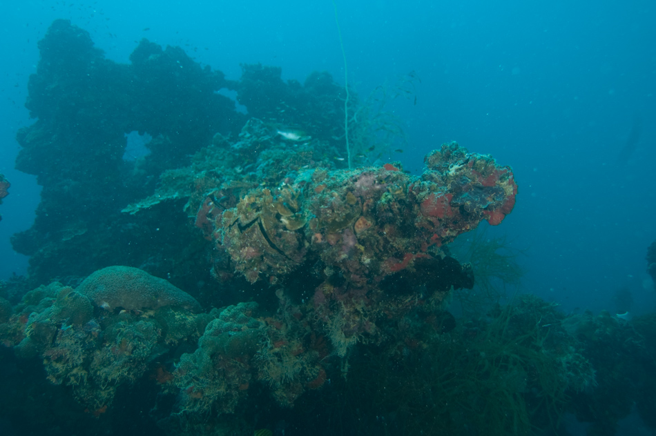 The business end of the front mounted gun on the Japanese oil transporter Iro in Palau