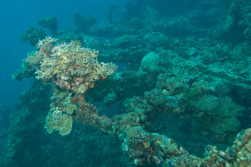Part of the circular gun mount used to revolve the ship's cannon on the Japanese oil transporter Iro in Palau