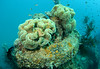 Soft corals atop the wreck