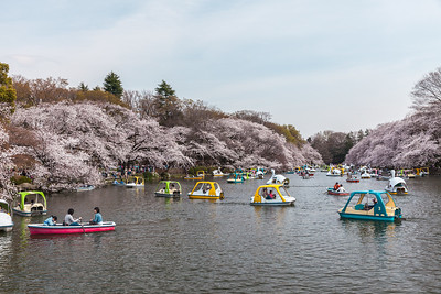 Inokashira Park in Kichijo-ji