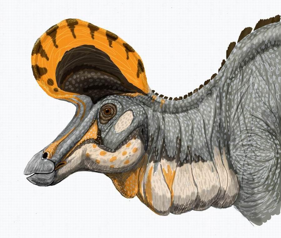 Lambeosaurus, magnicristatus
