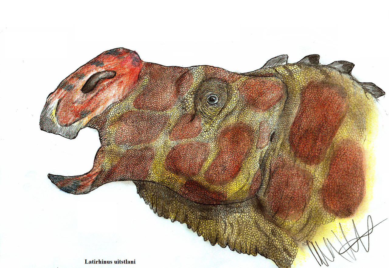 latirhinus, uitstlani, teratophoneus