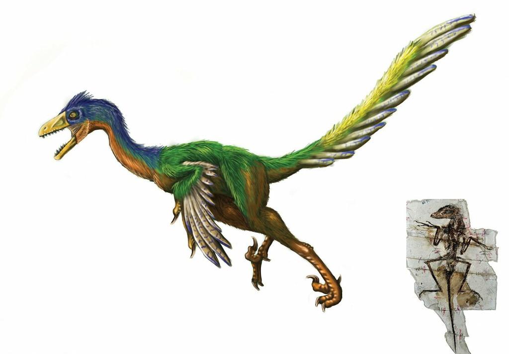 sinornithosaurus, millenii