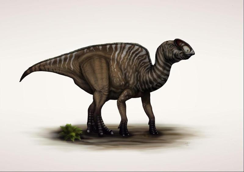 latirhinus, uitstlani, version