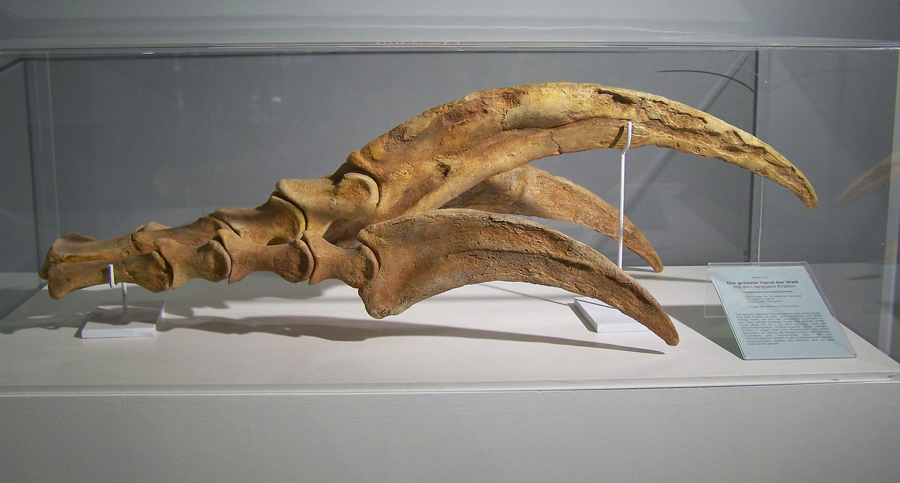 Therizinosaurus, claw