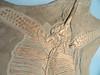 Eurhinosaurus, longirostris, detail, Holzmaden, Germany, Early, Jurassic, Royal, Ontario, Museum,