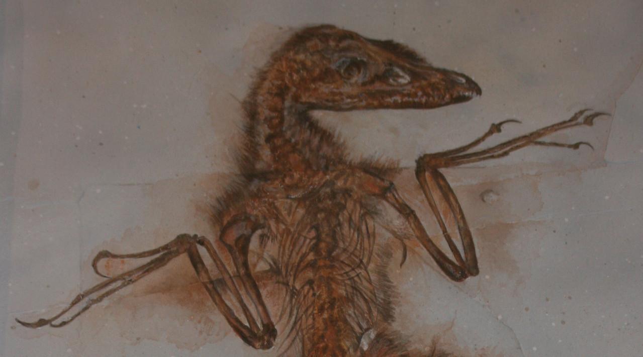 sinornithosaurus