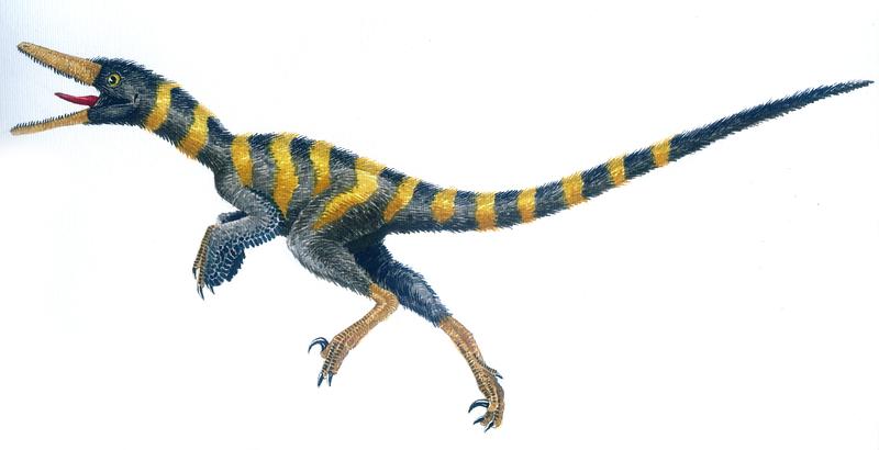 Buitreraptor, gonzalezorum