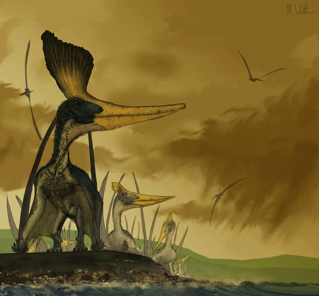 Pteranodon, harem