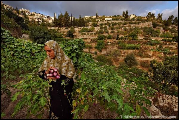 ISRAEL. PALESTINE. VILLAGE DE BATTIR. Les terrasses cultivées et le réseau d'irrigation sont classés au patrimoine mondial de l'UNESCO depuis 2014. C'est l un des plus anciens villages de Palestine. Le site est habité  depuis l age de fer