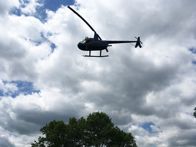 A helicopter drops the golf balls for the 50/50 raffle.