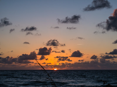 The sun starts its climb above the horizon as  Uniola paniculata (otherwise known as sea oats) wave in the breeze at Municipal Beach in Palm Beach on Tuesday, August 8, 2017. (Joseph Forzano / Deep Creek Images)