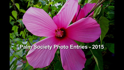 Palm Society Photo Contest - 2015