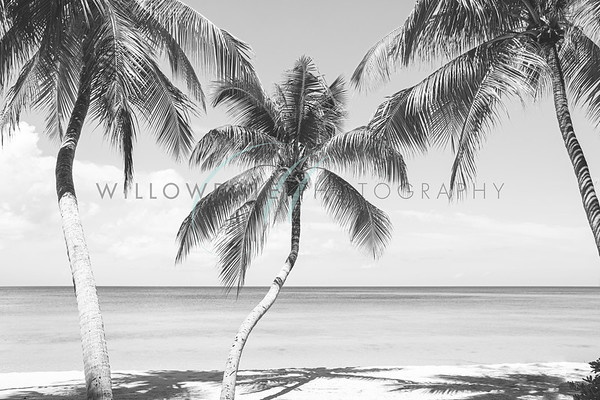 Palm Trees B&W