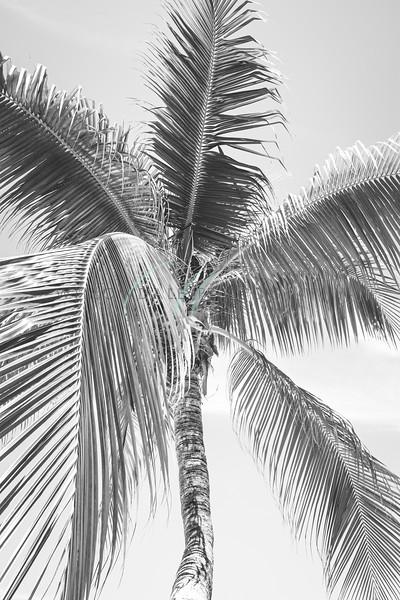Palm B&W