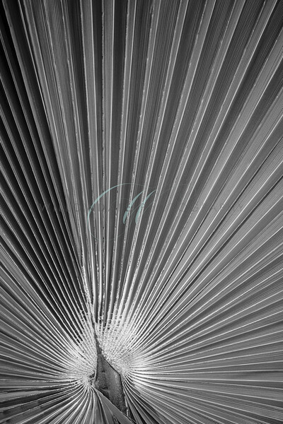 Abstract Thatch B&W