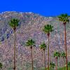 20190316_Palm Springs_7793-2