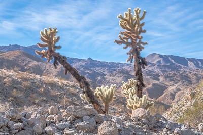 Chuck Harris Desert
