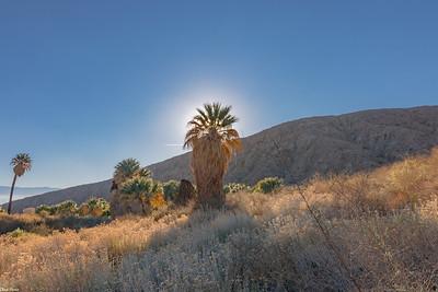 Chuck Harris Palm Desert