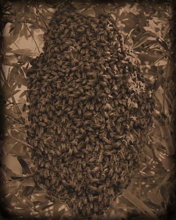 Bees Sepia